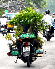 Moto Bonsai (Wronny) Tags: trees tree birds bike alberi funny transport curioso vietnam uccelli motorbike moto bonsai transports albero tra divertenti divertente strana trasporti uccellini alberelli gabbiette nikoncoolpixs3600