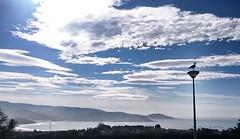 Gaviota sobre el cielo... (dediosromero) Tags: mar cielo nubes gaviota dediosromero