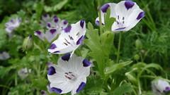 "DSC03754 (Laurence Bee) Tags: flowers flower macro nature water animal garden bright outdoor droplet nectar pollen apis mellifera specnature ""depth field"""