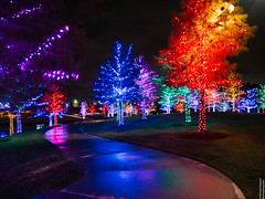 Vitruvian Lights 2015-1 (MikeyBNguyen) Tags: us texas unitedstates christmastree christmaslights christmastrees addison vitruvianpark vitruvianlights
