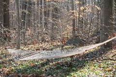 Rest Stop! (eyriel) Tags: trees nature forest woods humor hammock clearing