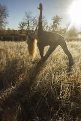 11.10.15 (Kassandra-M-Clarke) Tags: selfportrait yoga morninglight indie boho bohemian trianglepose morningfrost 365dayproject morningyoga