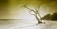 exodus (exode) (patrice ouellet) Tags: globalwarming exodus exode climat réchauffementclimatique patricephotographiste