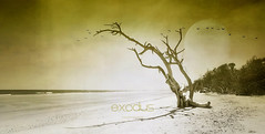 exodus (exode) (patrice ouellet - OFF) Tags: globalwarming exodus exode climat rchauffementclimatique patricephotographiste
