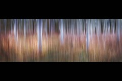 Poplars in Autumn (Broadward)