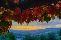 Autumn Vines (LouisAnnImage - The Photography of Howard Brown) Tags: autumn sunset mountain mountains color fall leaves sunrise leaf vines san hill hills lorenzo tuscany hdr tuscan agriturismo podere cloudsstormssunsetssunrises