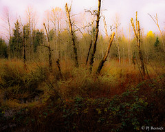 Soos Creek Impression (PJ Resnick) Tags: pjresnick perryjresnick analog film pjresnickgmailcom ©2016pjresnick ©pjresnick a1 canon camera colors color contrast light shadow texture black highspeediso shadows resnick dark colour detail bright rectangle rectangular 28mm canona1 fd28mm naturallight grain grainy portra800 blur blurry outdoor landscape serene forest plant tree foliage 35mm 4x5 yellow green red bark trail sooscreektrail kentwa