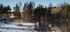 161230_006-328.jpg (Jacky Vastmans) Tags: limburg maasmechelen mechelseheide beriezen bevroren bos cold dennebomen dennen freezing frozen koud lake landscape landschap meer panorama pine sneeuw sneeuwlandschap snow snowylandscape sparren stilleven vriezen winter winterlandschap wood