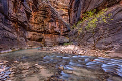 Cascades in the Narrows of Zion (PIERRE LECLERC PHOTO) Tags: zion nationalpark zionnationalpark utah usa america narrows virginriver river water flow canyon hiking autumn fall cascades canon5dsr pierreleclercphotography adventure travel