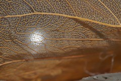 Struktur (michaelmueller410) Tags: rips leaf leaves winter reflectcion flash flashlight olympusepl5 macro makro shine pearl pearly