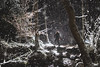 Winter walks (Michael Carver Photography) Tags: offcameraflash backlight snow little boy walking trees blizzard scottishhighlands