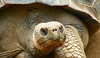 GIANT TORTOISE - Canary Islands (Urko Burko) Tags: excellent