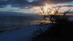 Sun, snow and sea (mpersson60) Tags: sverige sweden gotland hav sea snow snö solnedgång sunset