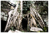 Ta Prohm (tote_nos) Tags: cambogia cambodia canon canon5d reflex viaggio trip oriente honeymoon vietnamcambodia 2016 october backpacking backpack backpacker east temple nature rocks divine divinity god pray wood tree trees root roots ta prohm taprohm