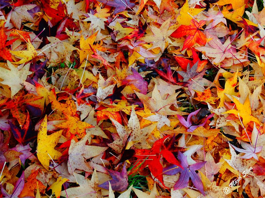 Águas Frias (Chaves) - ... diversidade colorida de folhas ...