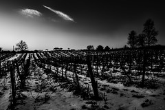 Snowy vineyard at sunrise...6O3A2294A (dklaughman) Tags: snow snowy vineyard sunrise tree blackwhite newyork senecalake fingerlakes dundee glenora
