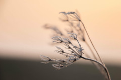 Frozen.jpg (Thor Arts) Tags: nature frost cold germany nikon d5500 tamron
