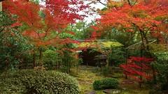 Teacult Garden - Roji / Kyoto Myoshin-ji  Daiho-in (maco-nonch★R(on/off)) Tags: daihoin roji 露地 露地庭 茶庭 teagarden myosinji temple 妙心寺 京都 大法院