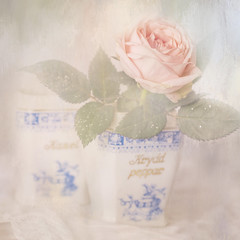 In my grandma´s pot (BirgittaSjostedt- away for a while.) Tags: rose flower still pot old texture paint simple soft pastel birgittasjostedt