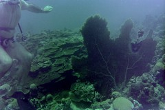n0005.09 (avaragado) Tags: barbados coralreefclub fd197504 fd197604 fd197905 n0005 tonysmith