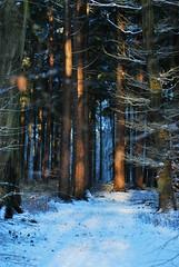 Winterwald (FrauN.ausD.) Tags: winter wald schnee sonne baum forrest tree snow sun morning morgen delmenhorst niedersachsen deutschland