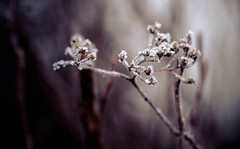 IMG_0009 (outsideartimages) Tags: frost fog winter foliage trees buds moss photography mono bare