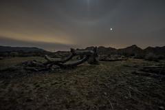Desert at Night (mcalma68) Tags: joshua tree park night dessert dead