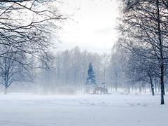 Mysterious playgroung (Jevgenijs Slihto) Tags: sonyhx300 hx300 sony park landscape winterlandscape snow white trees playgroung mystery empty snowytrees mist riga latvija latvia europe uzvarasparks pārdaugava fog winter nature emptyplayground