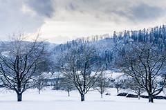 IMGP5719 (laurec.) Tags: luge neige oppenau