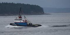 Storm Spray tug boat (D70) Tags: storm spray tug boat trincomali channel galiano island bc canada british columbia ledcor
