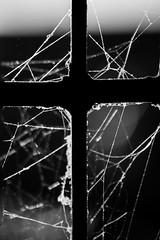 When Jesus was Spidey!!! (Ilakkiaraj) Tags: blackandwhite india window monochrome cross spiderweb cobweb spidey tamilnadu pondicherry nikond3200 ilakkiaraj