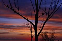 It's almost summer! (PhotoArt Images) Tags: sunset australia adelaide adelaidehills nikon70200 nikond810 photoartimages capturenxd
