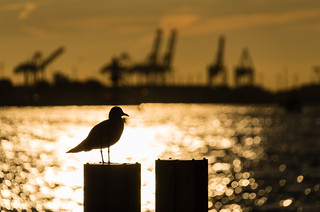 Hamburg Harbour Bokeh