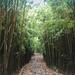 Hawaii Maui Bambuswald bamboo forest