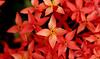 flor vermelha igreja (Uma Foto Por Dia Barato) Tags: flor florvermelha