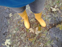 Hunter tall yellow (wellyTomWA) Tags: autumn classic leaves yellow h gelb hunter tall bltter gummistiefel wellingtons