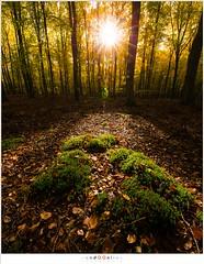 Herfstzonnetje (nandOOnline) Tags: mos groen herfst nederland natuur bos zon silhouet landschap bruin zonlicht gelderland drie beuk solsegat herfstbladeren speulderbos beukenboom beukenblad