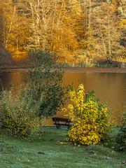 _B016467 Bench in gold (idunavision) Tags: leica morning autumn trees light fall mamiya nature water colors zeiss reflections germany pond rocks wasser herbst natur olympus nrw teich bäume beech farben felsen detmold buchen spiegelungen morgenlicht ostwestfalenlippe hornbadmeinberg externstine