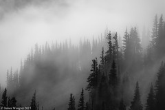 FOG IN THE FOREST (Oly-Pentax) Tags: trees fog olympicpeninsula olympics olympicnationalpark olympicmountains obstructionpoint