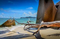 DSC_3117 2 (NICOLAS POUSSIN PHOTOGRAPHIE) Tags: soleil eau sable bleu coco fin vague plage rocher palmier bois seychelle turquoide