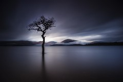 The Lonely Tree at Milarrochy Bay Loch Lomond Scotland 12/2015 (www.valsdarkroom.com) Tags: tree landscape bay scotland loney milarrochy
