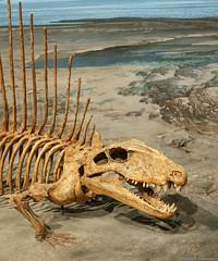 Dimetrodon (petechar) Tags: animal fossil utah dimetrodon lehi museumofancientlife thanksgivingpoint chordata vertebrata tetrapoda synapsida sphenacodontidae charlesrpeterson petechar sonyrx100m3