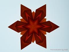 Freiburg Sterne by Alessandra Lamio (esli24) Tags: winter weihnachten corrugation origamistar papierstern origamistern esli24 ilsez alessandralamio freiburgsterne