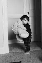 Teddy Bear (Jamie-Owens) Tags: