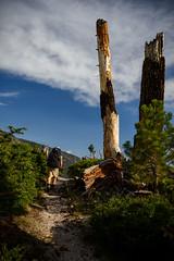Burn zone reminder (speedcenter2001) Tags: anseladamswilderness sierranevada sierra sierraphile highsierra california mountains wilderness hiking outdoor backpacking backcountry
