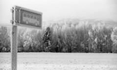 Bus stop (Foide) Tags: frostwork frost hoarfrost rime busstop