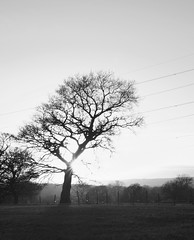 IMGP5742bw (graemes83) Tags: pentax sigma 1750 sunset dusk tree mist sun sheep