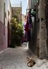 _DSC2165 (siegemund.martin) Tags: morocco azemmour