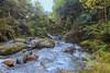 Harrington Creek (guytakesaphoto) Tags: newzealandscenery newzealand landscape photography ragphotography outdoorphotography nature scenic thegoodviews mothernature green naturephotography adventure nztourism travel outdoors outandabout creek water
