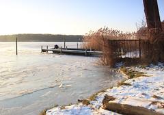 IMG_3166 (wozischra) Tags: berlin heiligensee spaziergang baumberge höchster baum altheiligensee